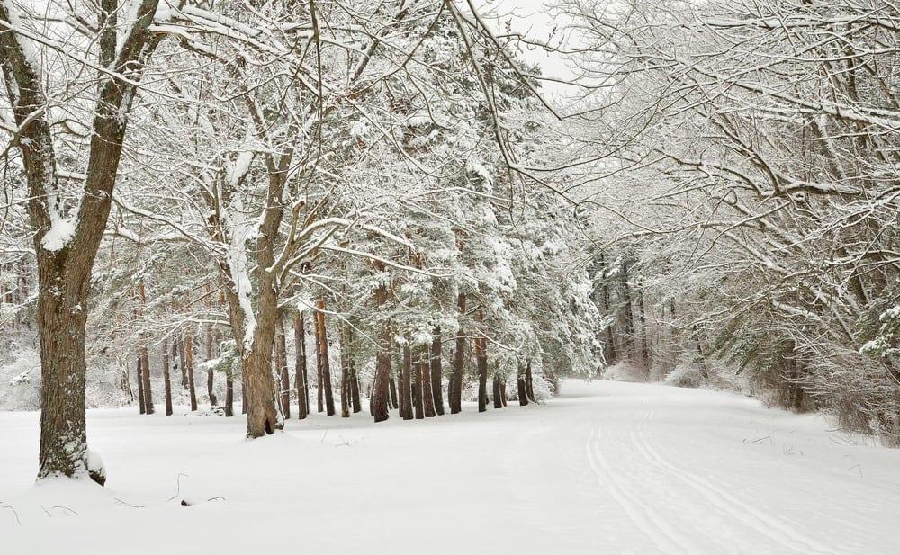 Amherst NY winter snow