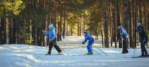 Men skiing in the woods